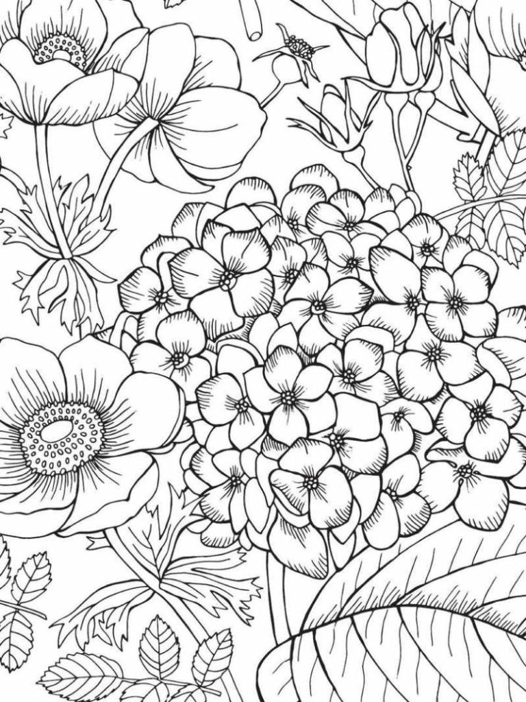 Jardim De Flores Desenhos Para Colorir