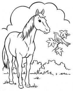 Desenhos De Animais Para Colorir E Imprimir Desenhos Para Colorir