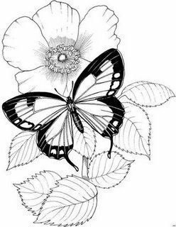 borboleta-12