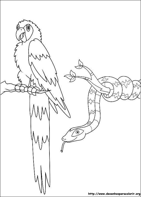 Arara E Cobra Diego Desenhos Para Colorir
