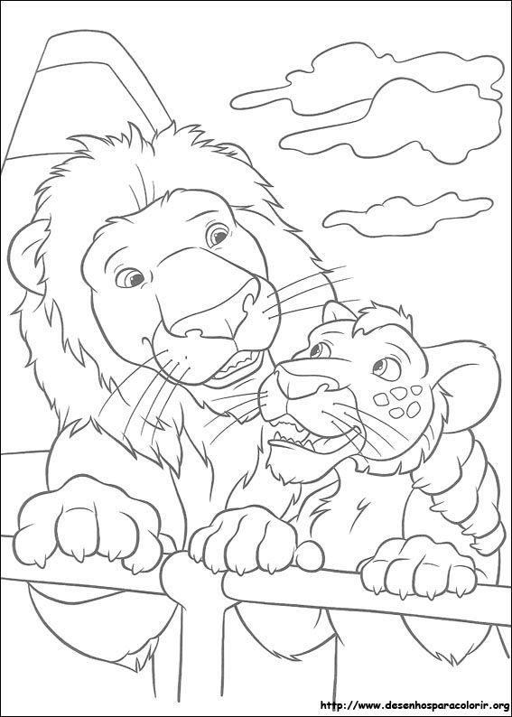 leão e filhote selvagem desenhos para colorir