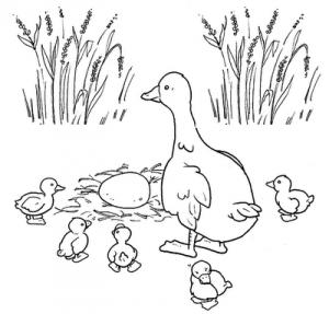Mamãe pato e seus filhotes